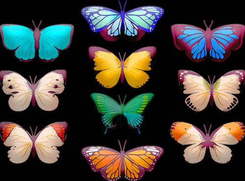 butterfly clip art  butterflies  insect