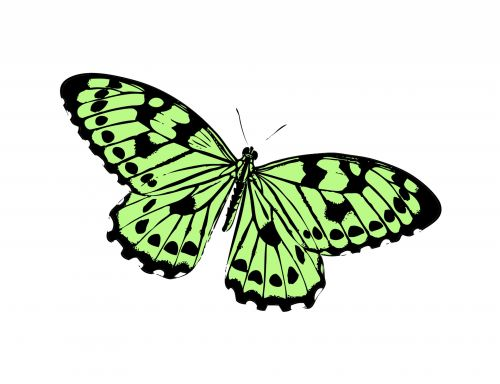Butterfly Clipart Illustration