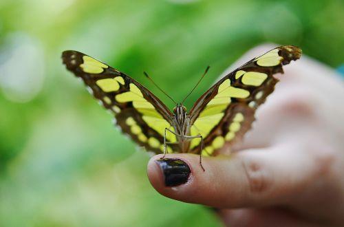 butterfly dolls dolls butterflies