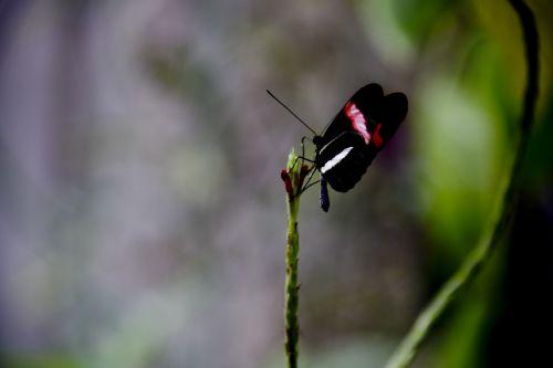 Butterfly On A Stem