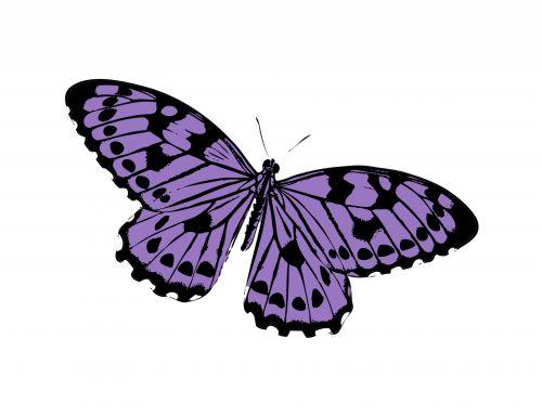 Butterfly Purple Clipart