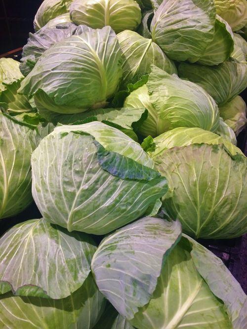 cabbage leafy white
