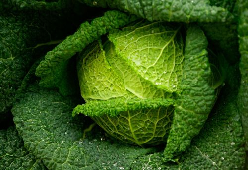 cabbage green vegetable freshness