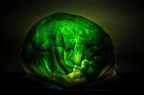 cabbage design icon
