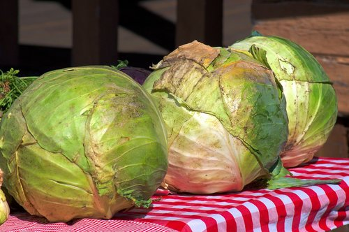 cabbage at the market  jackson  cabbage