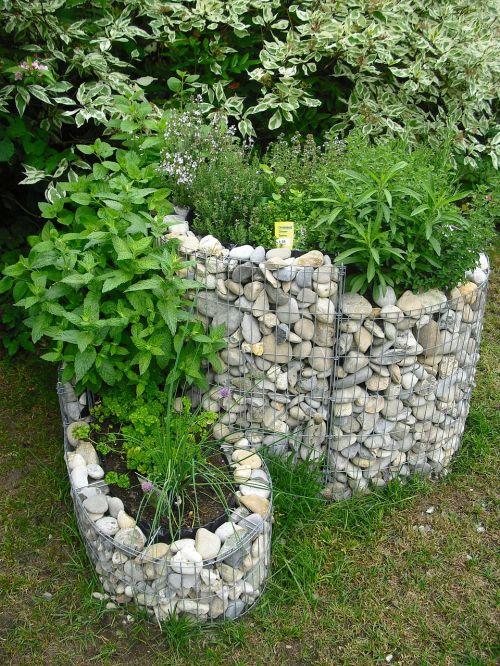 cabbage worm herbs garden