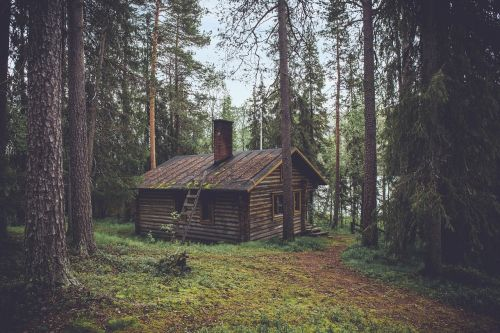 cabin forest seclusion