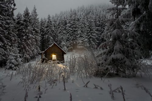 cabin pine trees wilderness