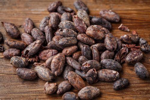 cacao bean cocoa bean cocoa