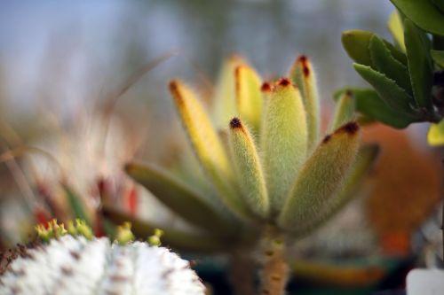 cacti succulent succulent plants
