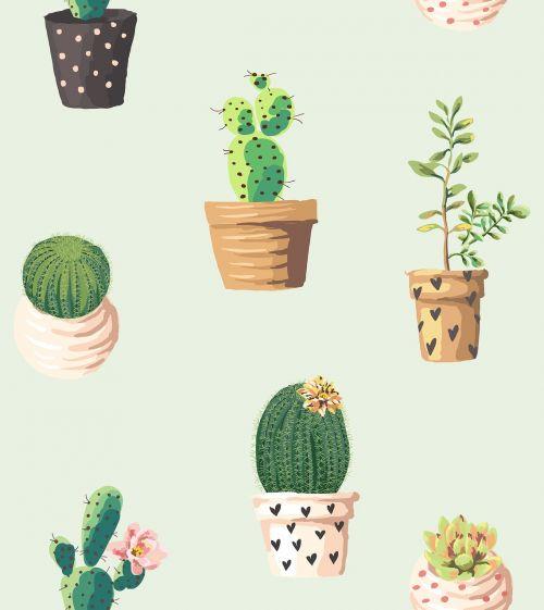 cacti northeast romantic