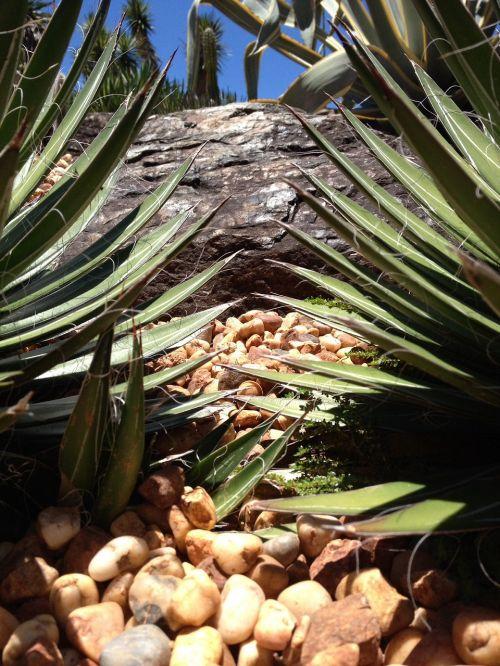 cacti plant se