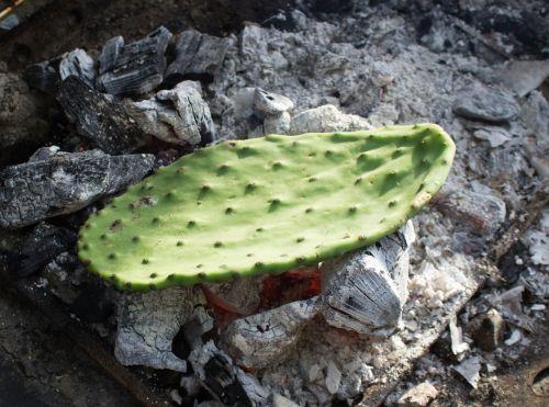cactus prickly pear leaf
