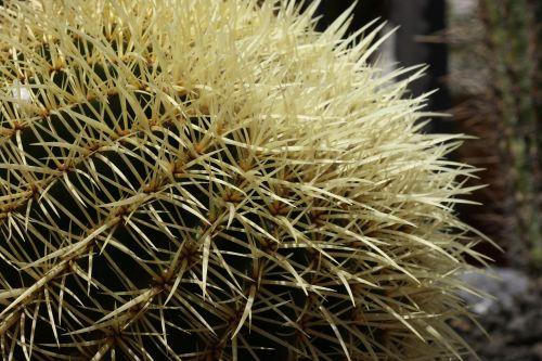 cactus spikes needles