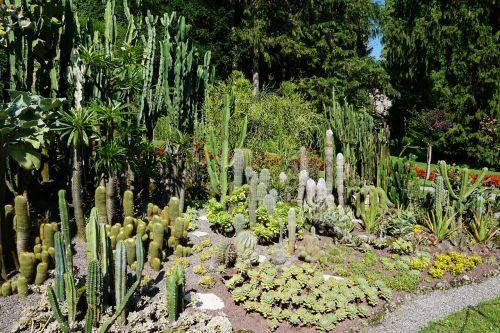cactus botanical garden überlingen