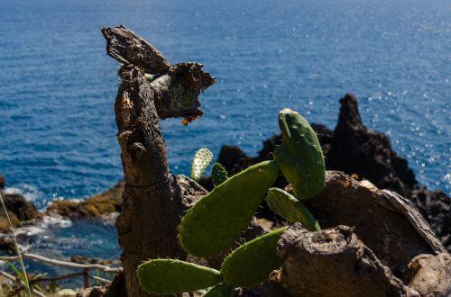 cactus cliff sea