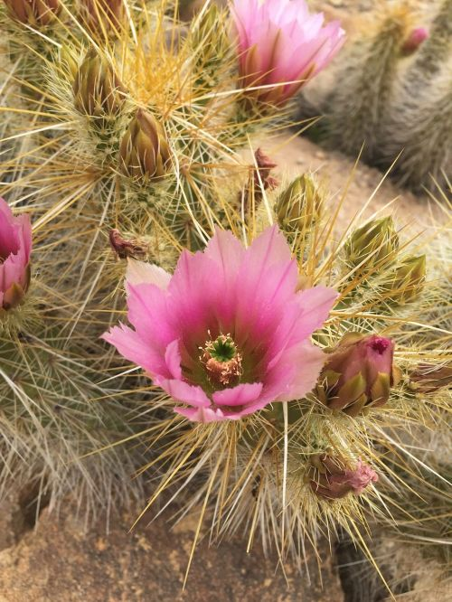cactus grief thorny
