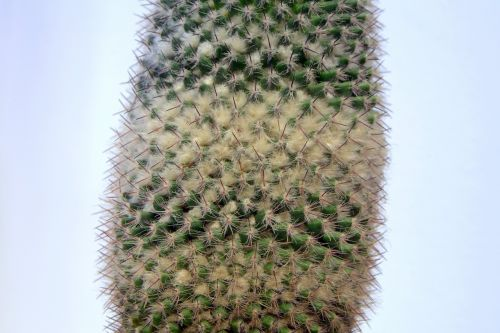 cactus spikes down
