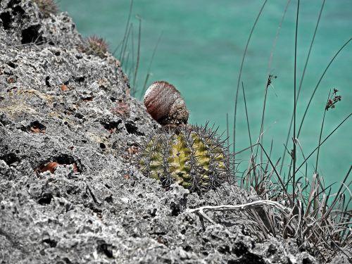 cactus rock caribbean