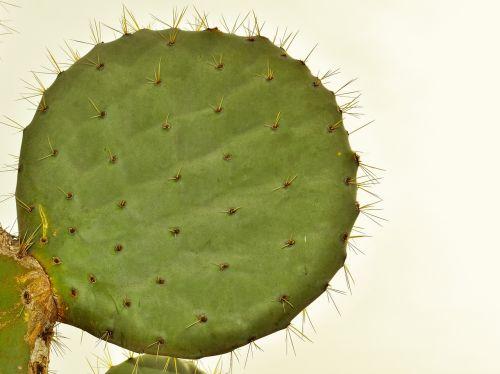 cactus plant nature