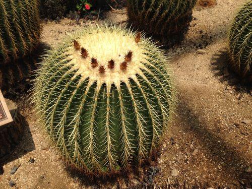 cactus thorn botanical garden