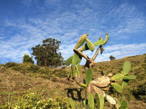 cactus azores sky