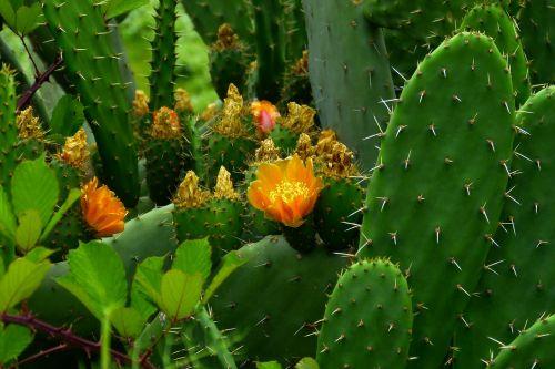 cactus plant prickly