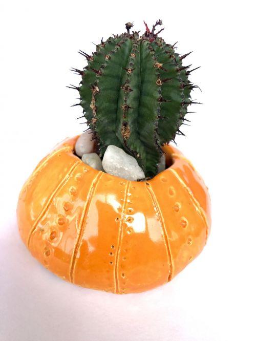 cactus houseplant pot