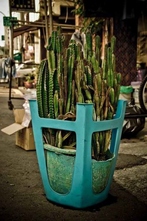 cactus taiwan kaohsiung