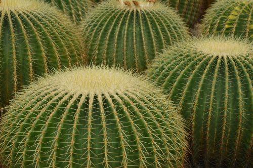 cactus desert spines
