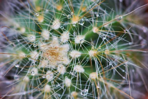 cactus plant dea