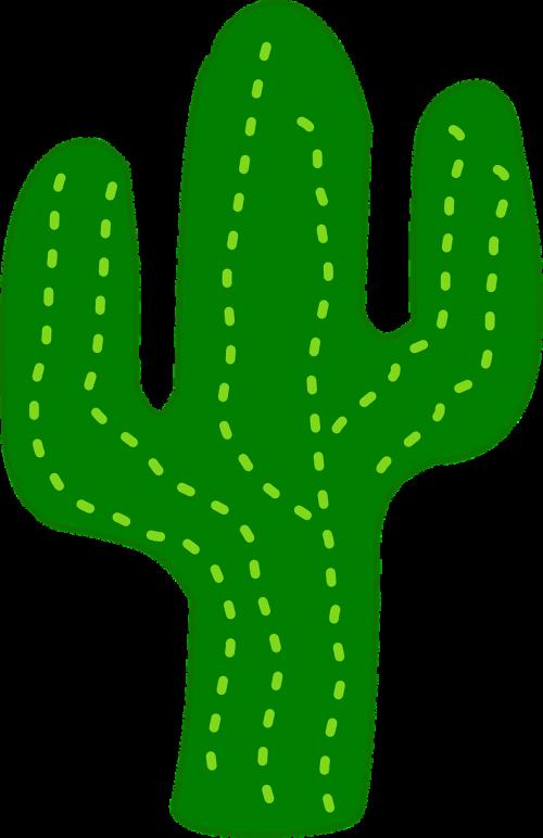 cactus flora desert