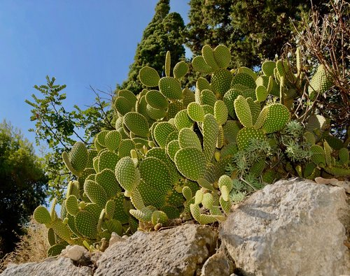 cactus  plant  thorny