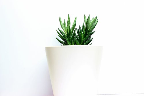 cactus  white base  decor