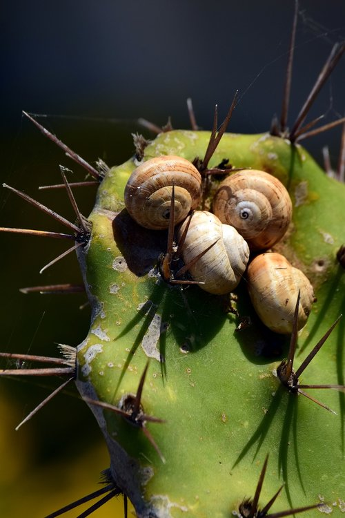 cactus  green  snails