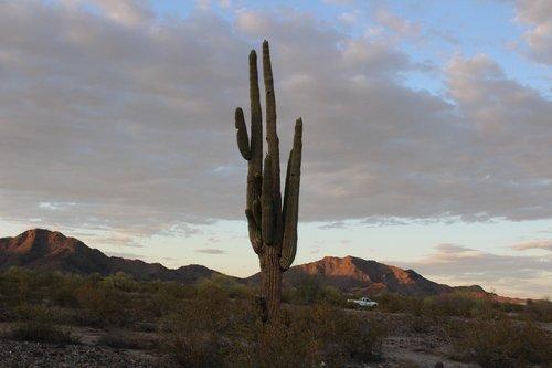 cactus  hiking  desert