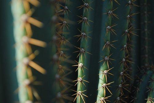 cactus  green  texture