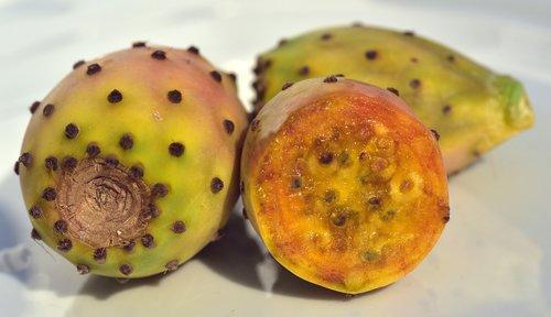 cactus  prickly pear  fruit