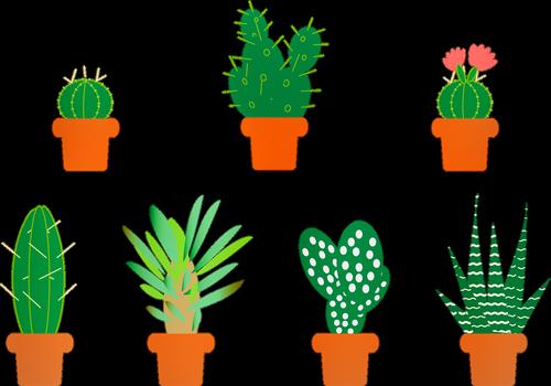 cactus  aloe vera  saguro