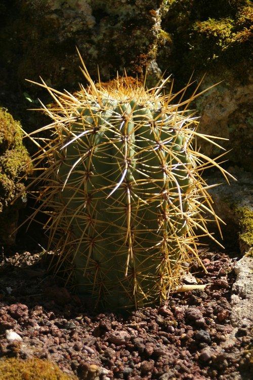 cactus  plants  tropics