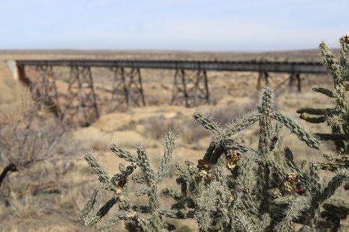 cactus  train trellis  desert