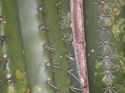 cactus green cactus prick