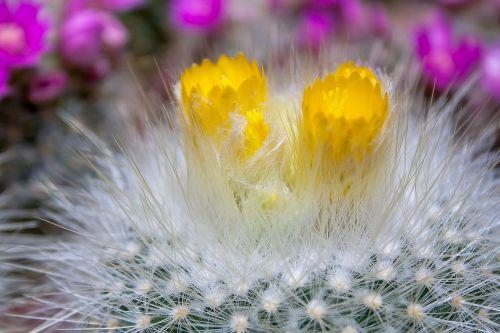 cactus prickly plant