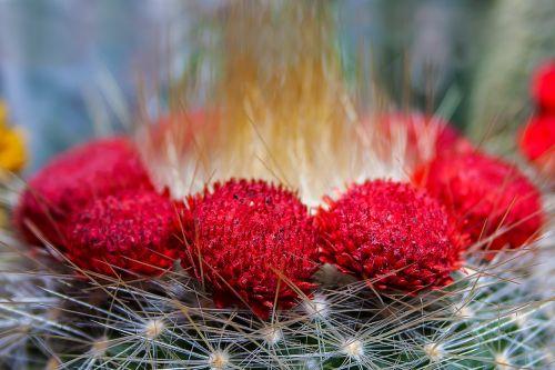 cactus prickly nature