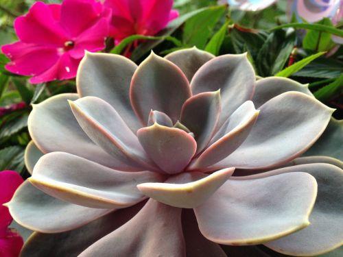 kaktusas, gamta, augalas, kaktusas šiltnamius, lapai