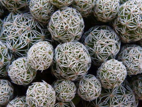 cactus detail relief