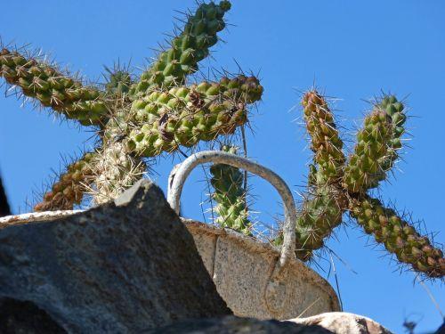 cactus stone zinc