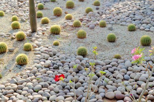 Cactus Crop