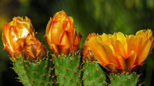cactus flower  thorns  cactus