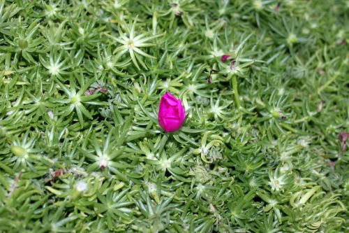 Cactus Flower In The Greenery
